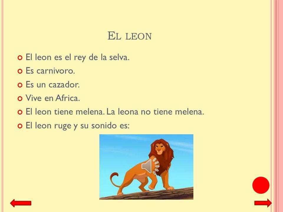 El leon El leon es el rey de la selva. Es carnivoro. Es un cazador.