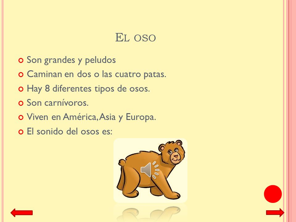 El oso Son grandes y peludos Caminan en dos o las cuatro patas.