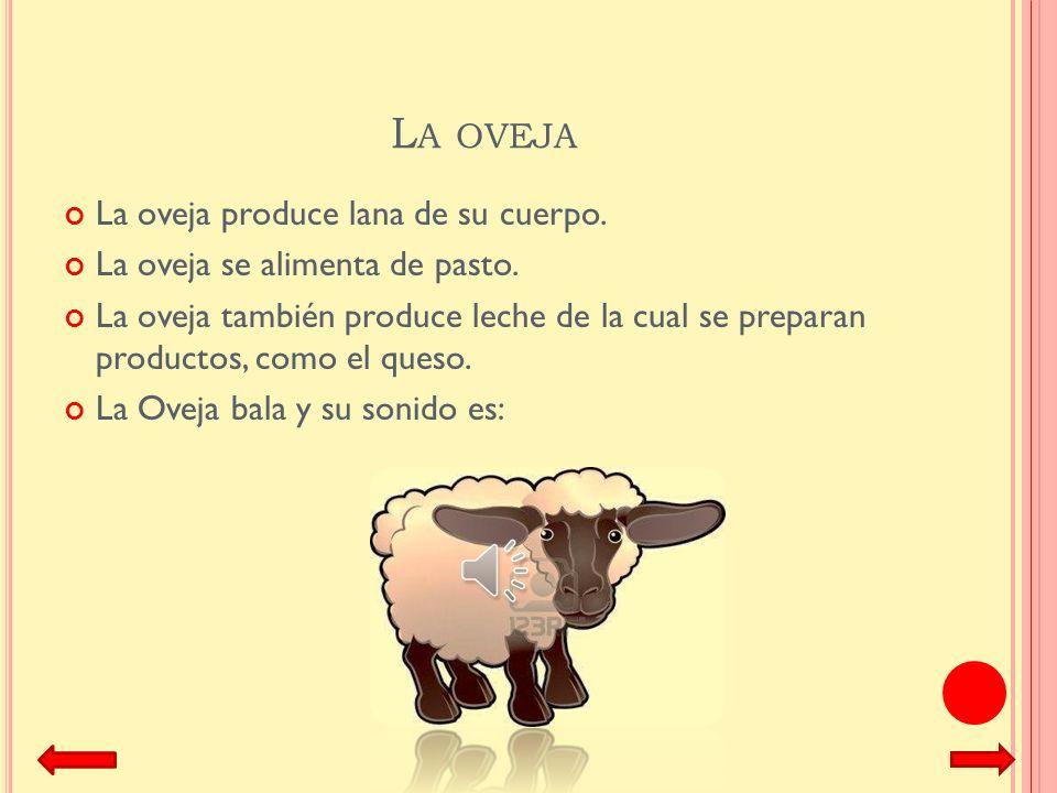 La oveja La oveja produce lana de su cuerpo.