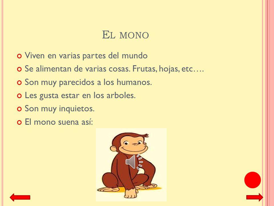 El mono Viven en varias partes del mundo