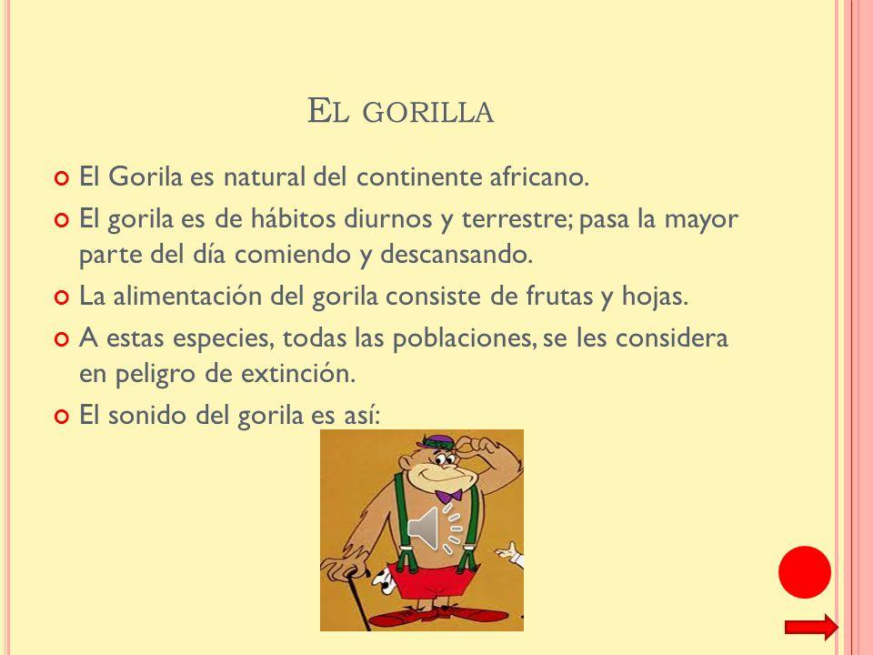 El gorilla El Gorila es natural del continente africano.
