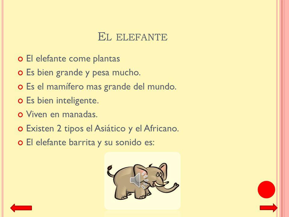 El elefante El elefante come plantas Es bien grande y pesa mucho.