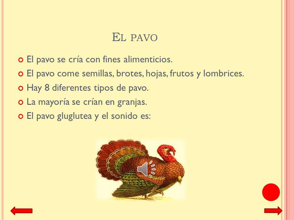 El pavo El pavo se cría con fines alimenticios.