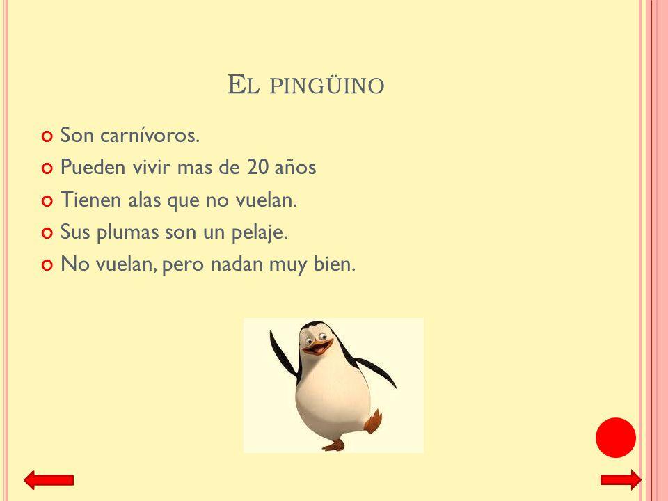 El pingüino Son carnívoros. Pueden vivir mas de 20 años