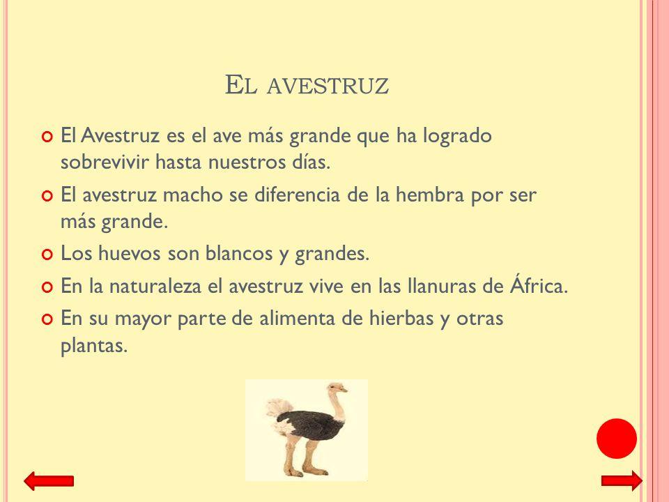 El avestruz El Avestruz es el ave más grande que ha logrado sobrevivir hasta nuestros días.