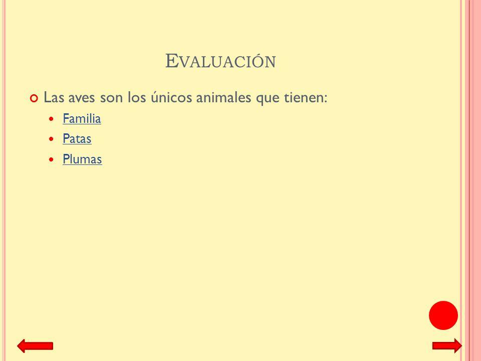 Evaluación Las aves son los únicos animales que tienen: Familia Patas