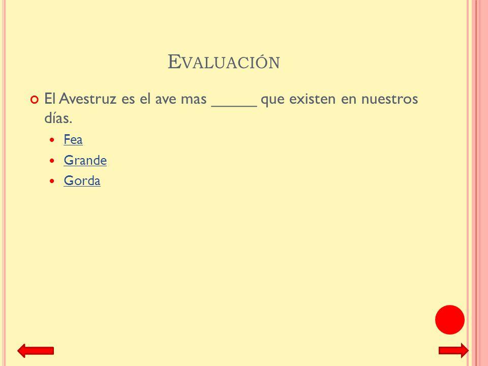 Evaluación El Avestruz es el ave mas _____ que existen en nuestros días. Fea Grande Gorda