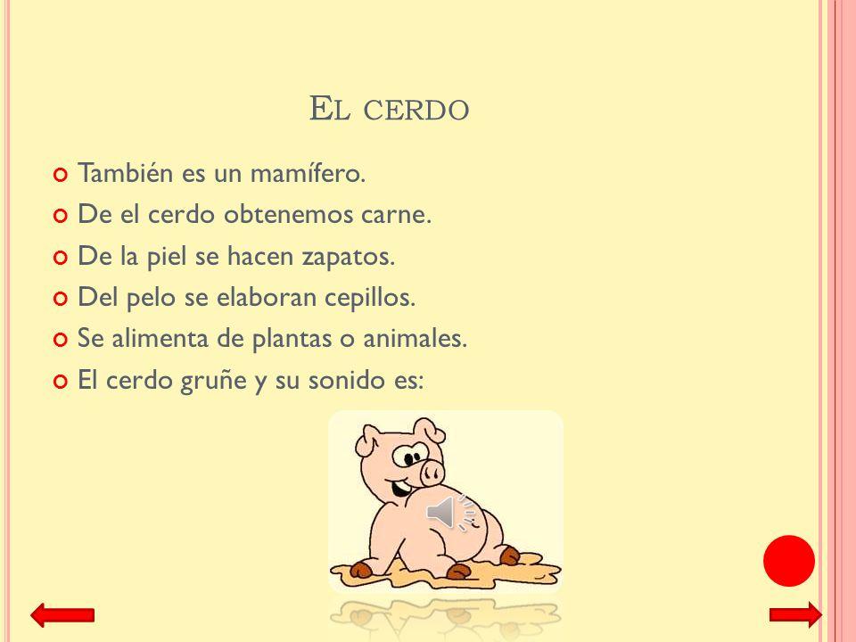 El cerdo También es un mamífero. De el cerdo obtenemos carne.