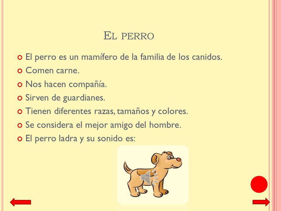 El perro El perro es un mamífero de la familia de los canidos.