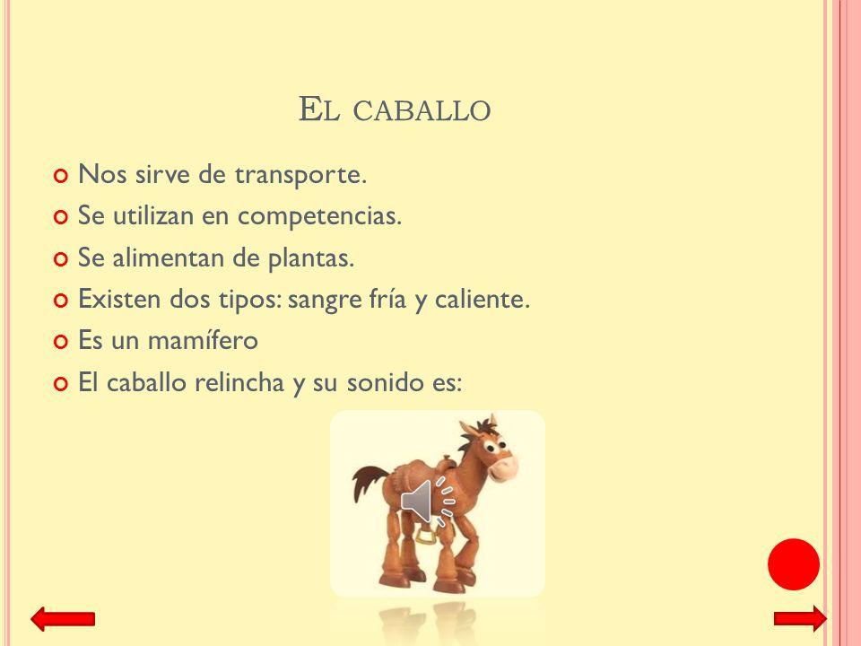 El caballo Nos sirve de transporte. Se utilizan en competencias.