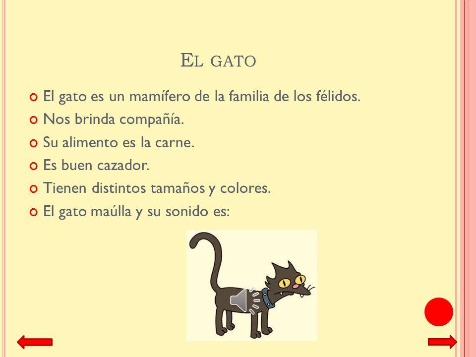 El gato El gato es un mamífero de la familia de los félidos.