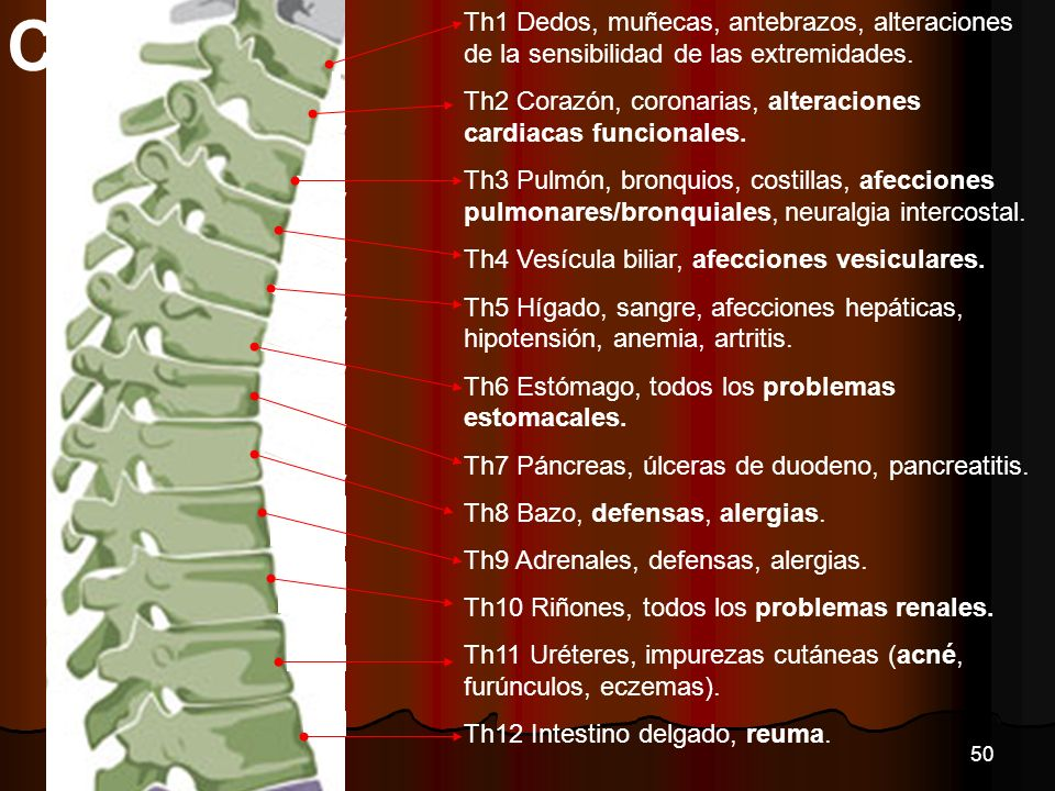 CVT Th1 Dedos, muñecas, antebrazos, alteraciones de la sensibilidad de las extremidades.