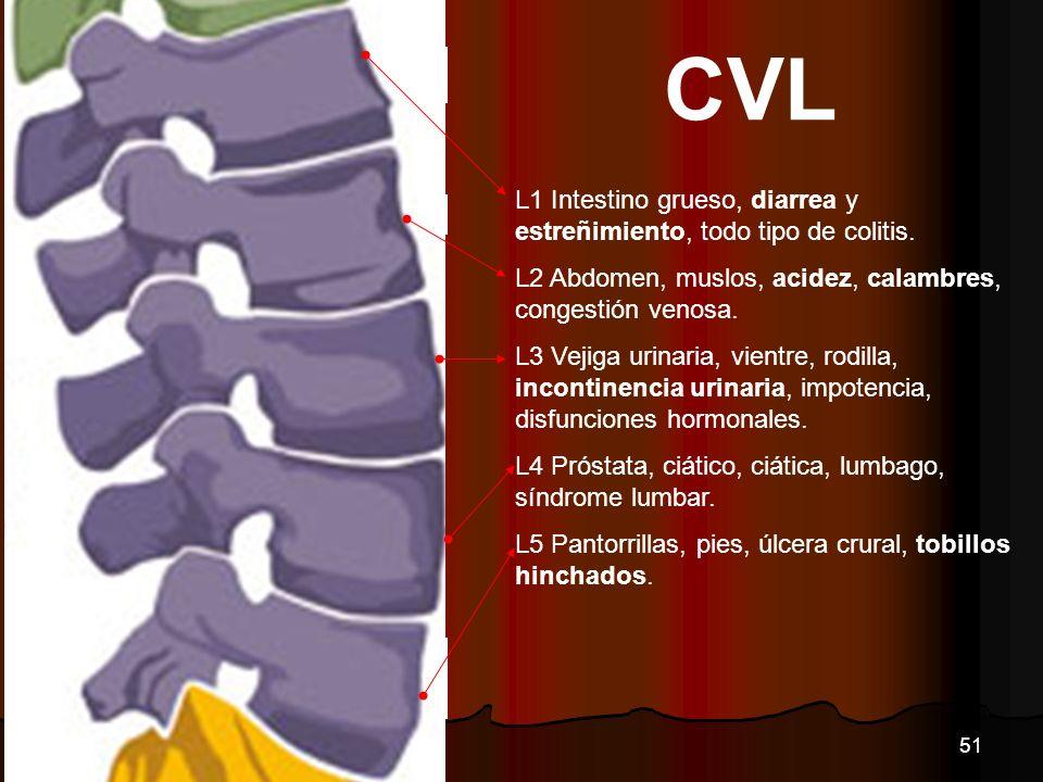 CVL L1 Intestino grueso, diarrea y estreñimiento, todo tipo de colitis. L2 Abdomen, muslos, acidez, calambres, congestión venosa.