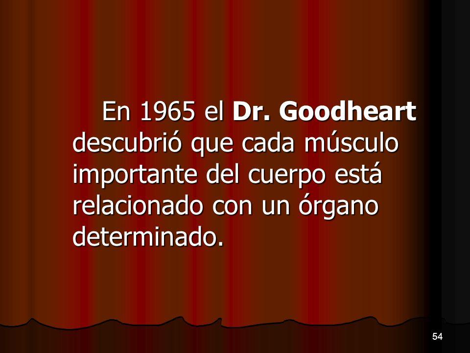 En 1965 el Dr. Goodheart descubrió que cada músculo importante del cuerpo está relacionado con un órgano determinado.