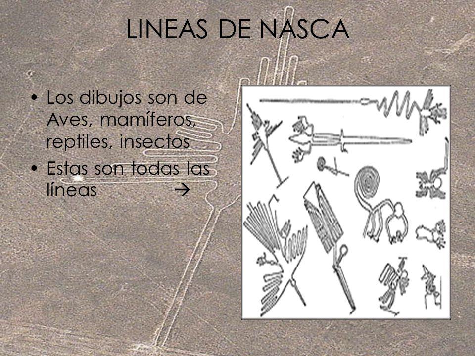 LINEAS DE NASCA Los dibujos son de Aves, mamíferos, reptiles, insectos