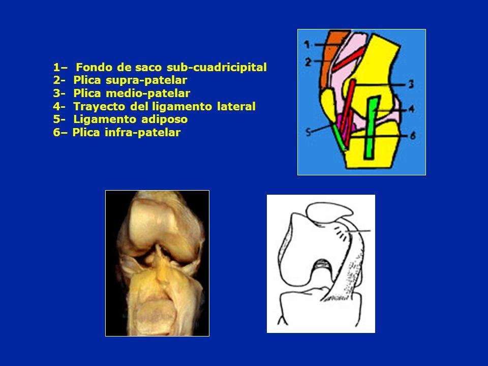 1– Fondo de saco sub-cuadricipital