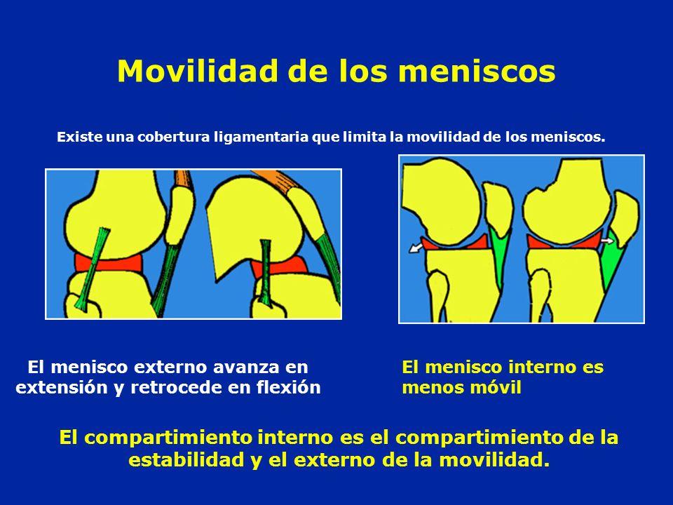 Movilidad de los meniscos
