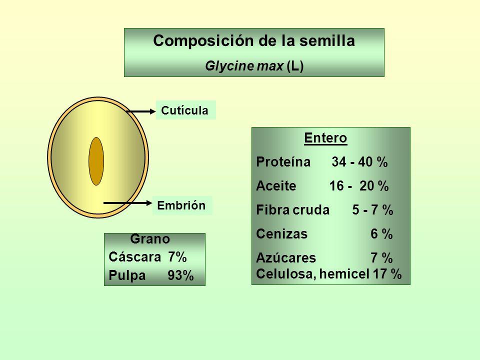 Composición de la semilla