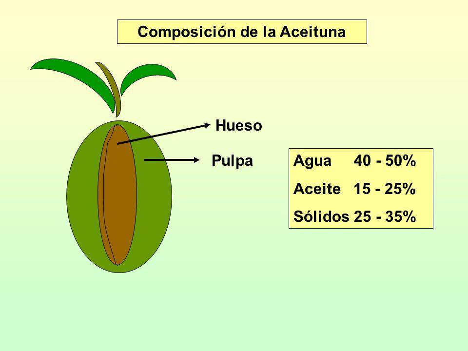 Composición de la Aceituna