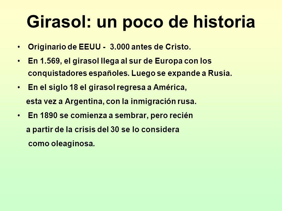 Girasol: un poco de historia