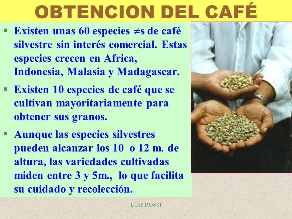 OBTENCION DEL CAFÉ
