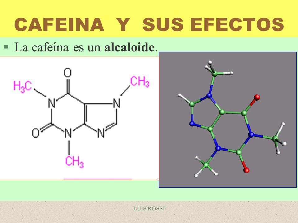 CAFEINA Y SUS EFECTOS La cafeína es un alcaloide. LUIS ROSSI