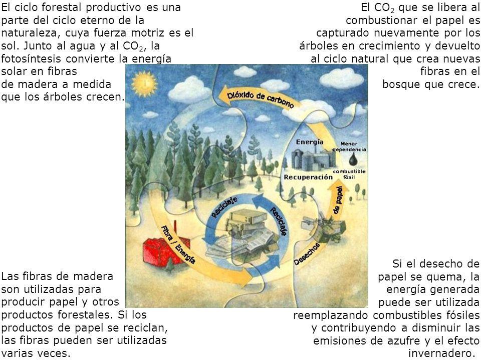 El ciclo forestal productivo es una parte del ciclo eterno de la naturaleza, cuya fuerza motriz es el sol. Junto al agua y al CO2, la fotosíntesis convierte la energía solar en fibras