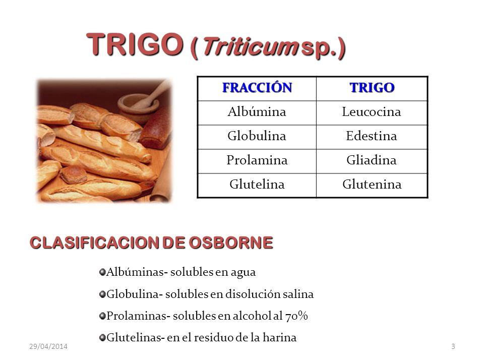 TRIGO (Triticum sp.) CLASIFICACION DE OSBORNE FRACCIÓN TRIGO Albúmina