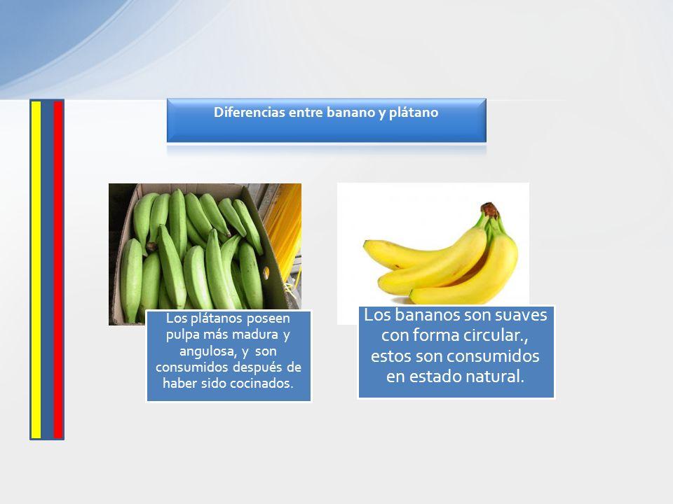 Diferencias entre banano y plátano