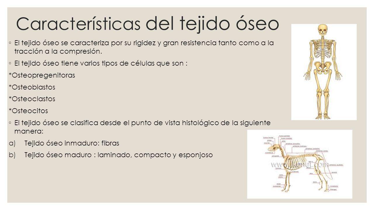 Características del tejido óseo