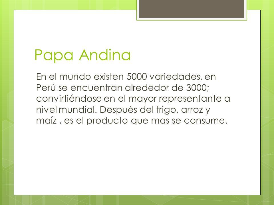 Papa Andina