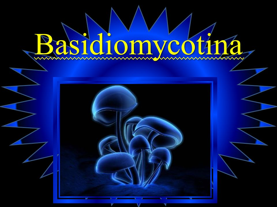 Basidiomycotina
