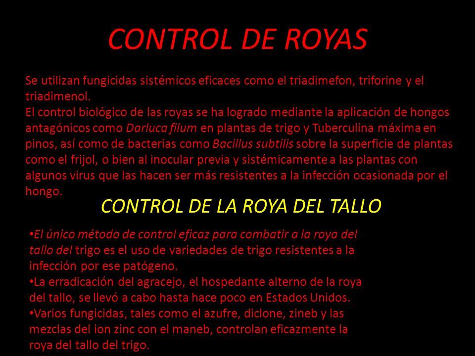 CONTROL DE LA ROYA DEL TALLO