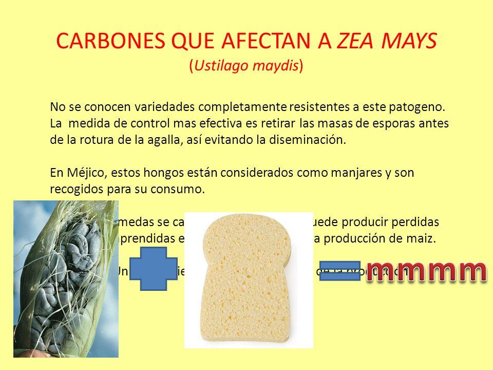 CARBONES QUE AFECTAN A ZEA MAYS (Ustilago maydis)