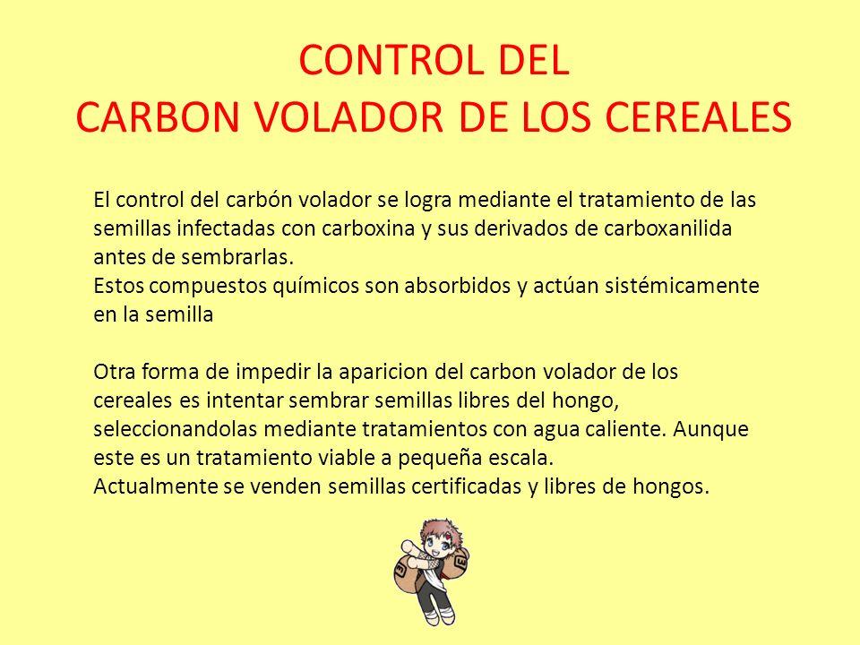 CONTROL DEL CARBON VOLADOR DE LOS CEREALES