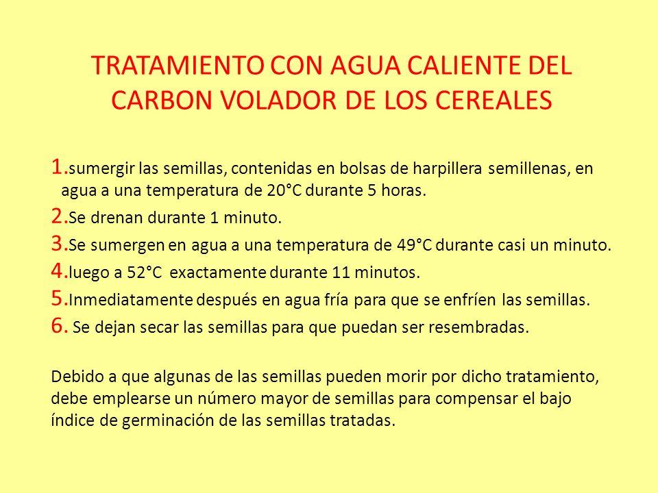 TRATAMIENTO CON AGUA CALIENTE DEL CARBON VOLADOR DE LOS CEREALES