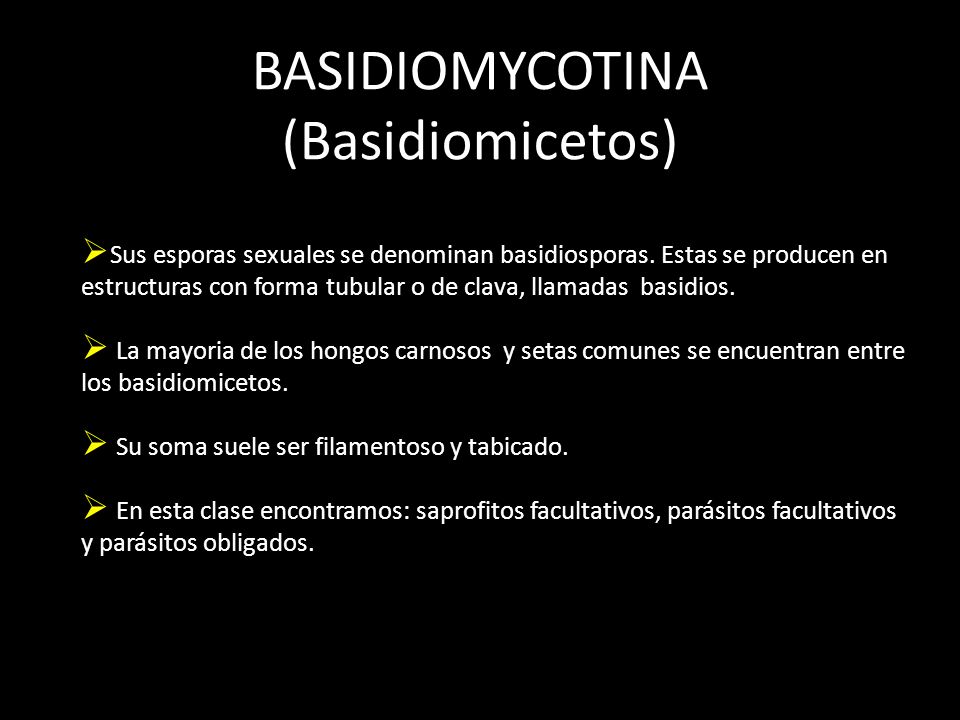 BASIDIOMYCOTINA (Basidiomicetos)