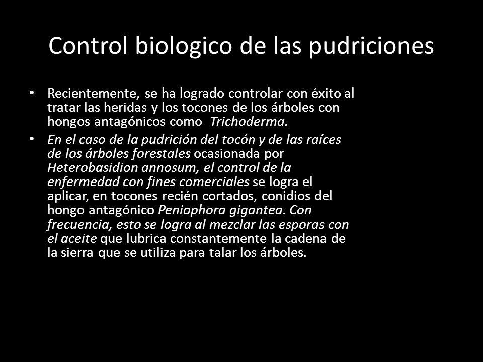 Control biologico de las pudriciones