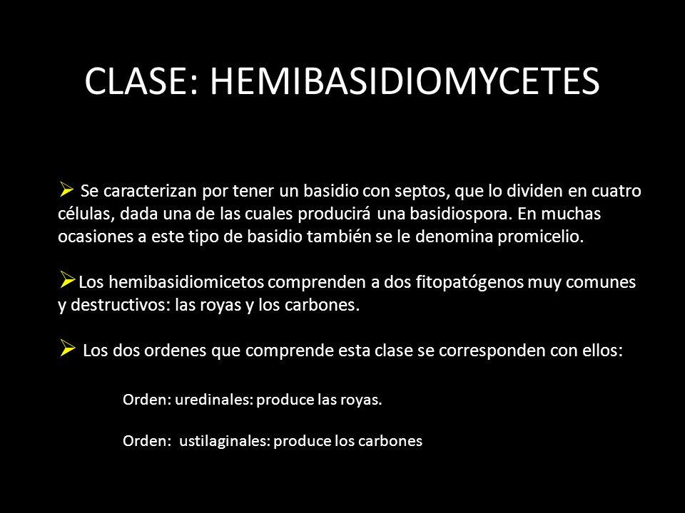 CLASE: HEMIBASIDIOMYCETES