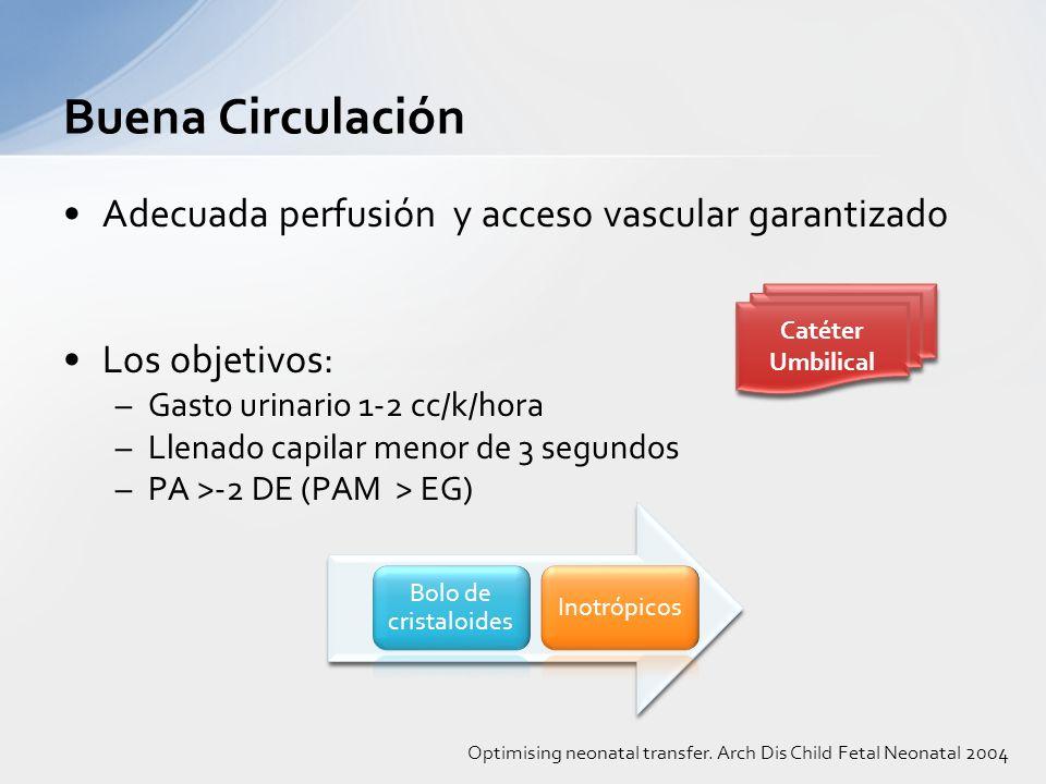 Buena Circulación Adecuada perfusión y acceso vascular garantizado