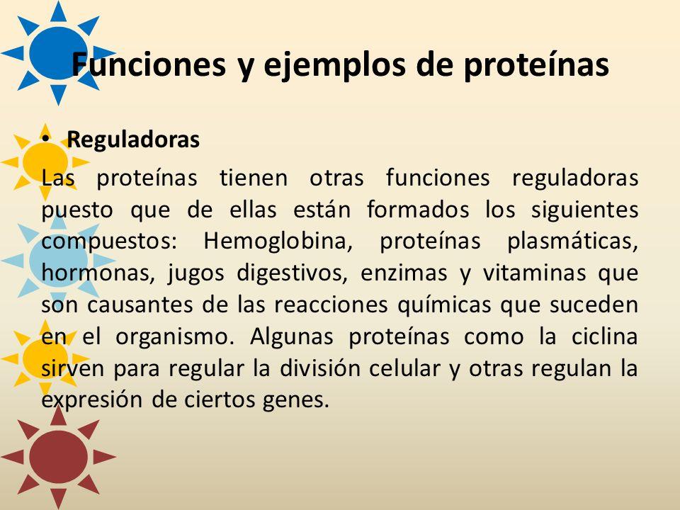 Funciones y ejemplos de proteínas