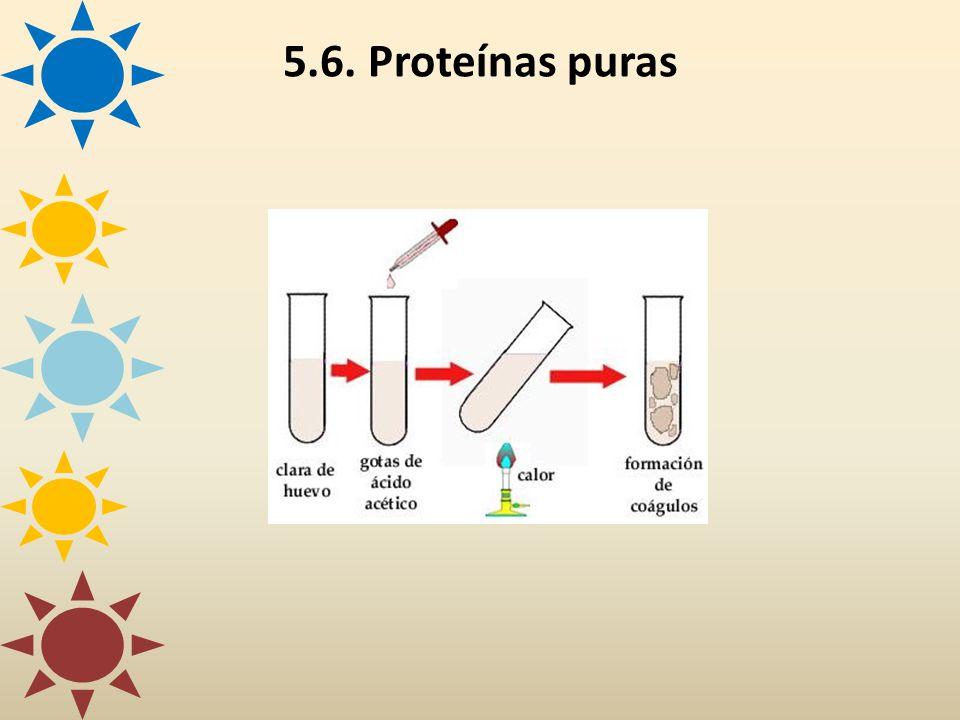 5.6. Proteínas puras