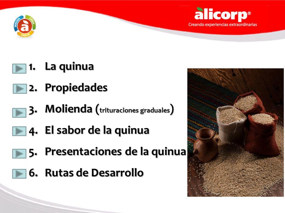 Molienda (trituraciones graduales) El sabor de la quinua