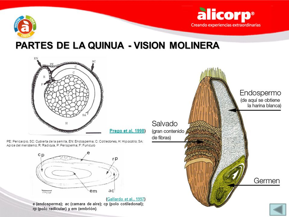 PARTES DE LA QUINUA - VISION MOLINERA