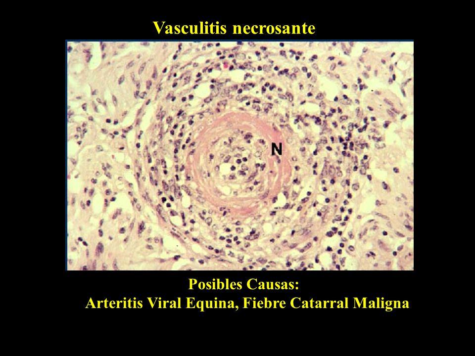 Arteritis Viral Equina, Fiebre Catarral Maligna