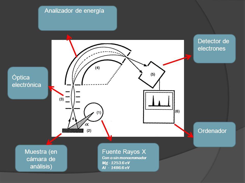 Muestra (en cámara de análisis)