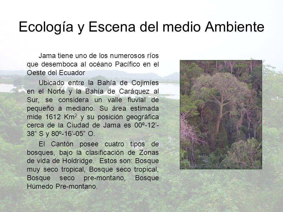 Ecología y Escena del medio Ambiente