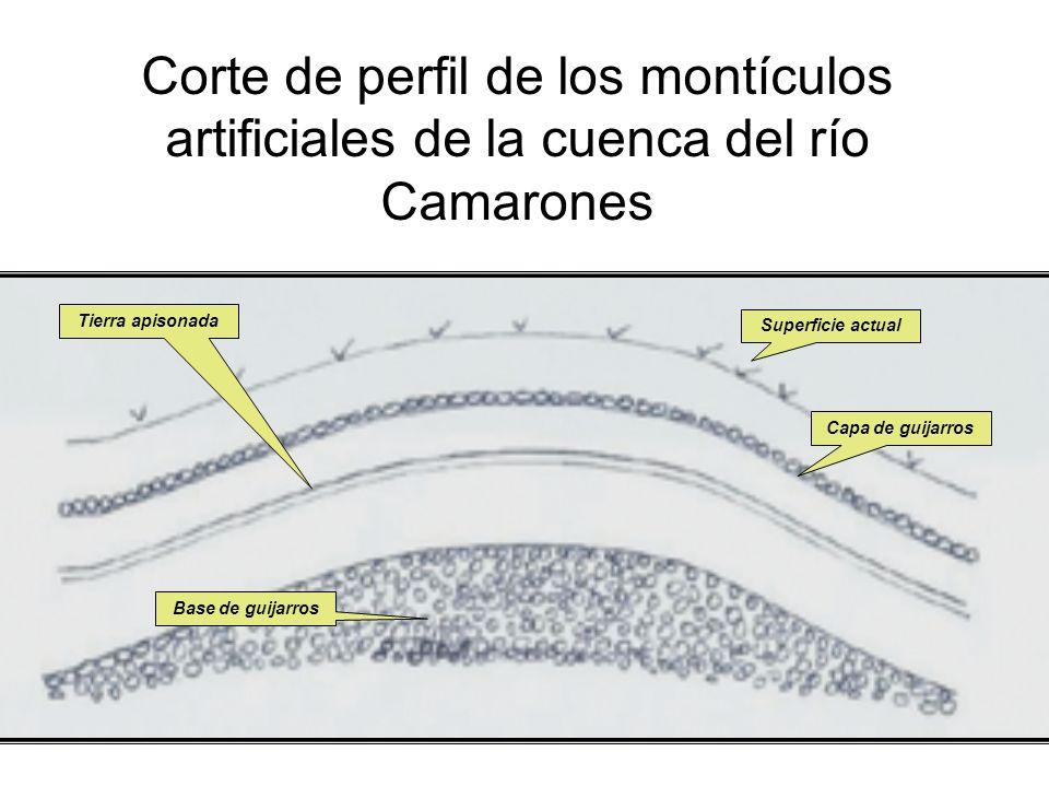 Corte de perfil de los montículos artificiales de la cuenca del río Camarones