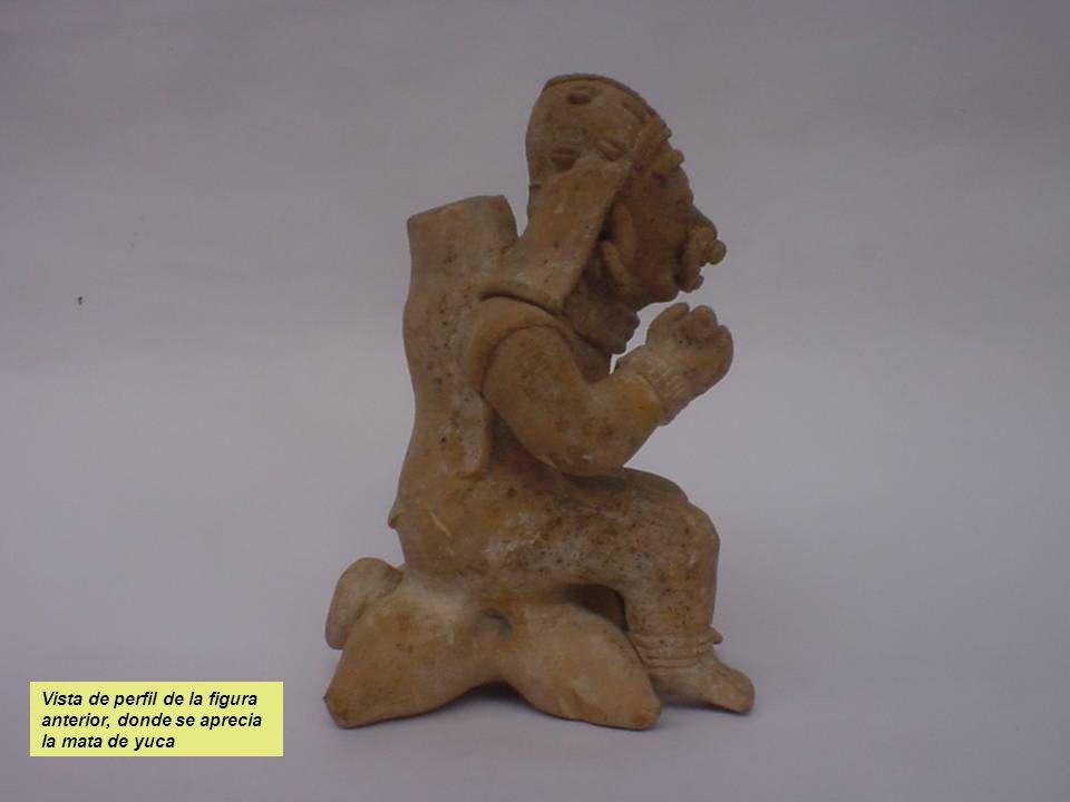 Vista de perfil de la figura anterior, donde se aprecia la mata de yuca