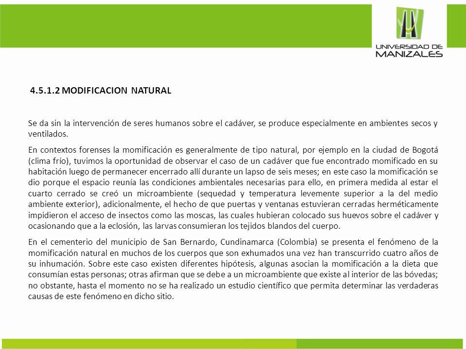 4.5.1.2 MODIFICACION NATURAL Se da sin la intervención de seres humanos sobre el cadáver, se produce especialmente en ambientes secos y ventilados.